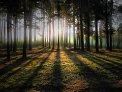 В Слуцком, Солигорском и Любанском районах запрет на посещение лесов не снят