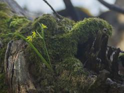 В Слуцком и Несвижском районах снят запрет на посещение лесов