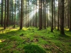 В Слуцком и соседних районах снят запрет на посещение лесов