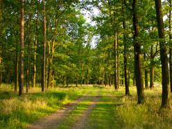 В Солигорском, Любанском и Стародорожском районах введены запреты на посещение лесов