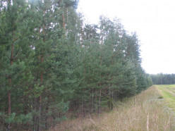 В лесах Слуцкого района объявлен пожароопасный сезон