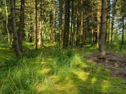 Пенсионеры заблудились в лесу в Слуцком районе. Их искали спасатели, милиция и лесхоз