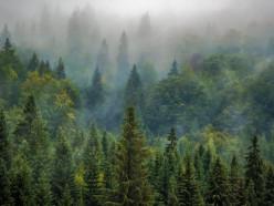 Запрет на посещение лесов отменили в 4-х районах Минской области