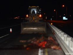 На трассе под Слуцком микроавтобус сбил лошадь, следом на животное наехала маршрутка. Пострадала пассажирка
