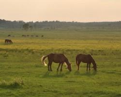 Украл с пастбища двух лошадей