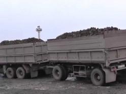 Пьяный водитель фуры вёз свёклу на сахарный завод в Несвижском районе