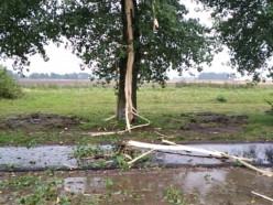 В Слуцке проходит мощный грозовой фронт. Как выглядит дерево, в которое попала молния