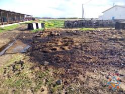 Второй за неделю пожар на молочно-товарной ферме в Слуцком районе