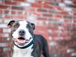 С начала 2017 года увеличатся ставки налога на собак