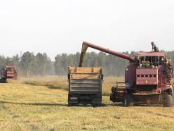 Слуцкий и Солигорский районы преодолели 100-тысячный рубеж по намолоту зерна