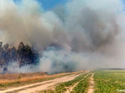 В Слуцком районе недалеко от деревни Нежевка горит лес