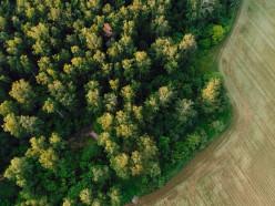 В Слуцком районе с 28 июня снят запрет на посещение лесов