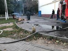 Осы атаковали детей в жилом районе Слуцка (обновлено)