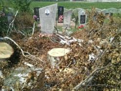 На кладбище в деревне Малая Падерь спилили дерево и оставили мусор (обновлено)