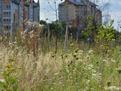 Местная жительница: возле «чеховского» храма посадили парк, но всё заросло бурьяном