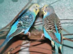 Просто фото попугайчиков =)