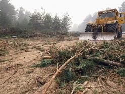 Лесхоз не убирает порубки и помогает зимовать короеду? Ответ главного лесничего