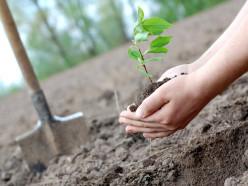Случчане могут принять участие в восстановлении лесов