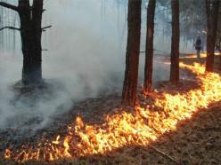 За выходные в области произошло 8 лесных пожаров, в том числе и в Слуцком районе