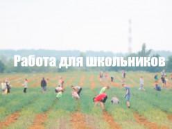 Открыт набор в сельскохозяйственный отряд для школьников