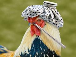 Вирус птичьего гриппа достиг Польши и Венгрии