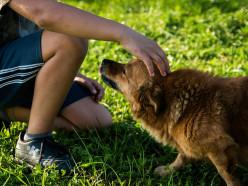 «Это будет продолжаться до тех пор, пока эти псы не загрызут ребёнка». Бродячие собаки атакуют Слуцкий район