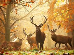 Discovery опубликовал первый фильм о Беларуси «Беловежская пуща. Первозданный лес»
