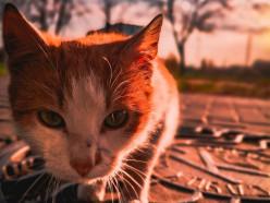 Жил на улице около «Блино», переехал в столичную квартиру. Как фото в Instagram круто изменило жизнь слуцкого кота