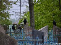 Жители Слуцкого района дозвонились на «прямую линию» управделами Миноблисполкома: не довольны состоянием кладбища