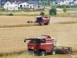 Южные районы Минской области приступили к уборке зерновых