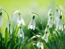 Весна сходит сума. Нанеделе до +23 °С, аввоскресенье возможен снег