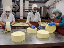 Как технологии помогают слуцким сыроделам обходиться почти без рук