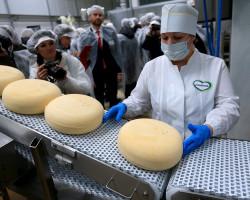 Слуцкие сыроделы планируют открыть в России два завода