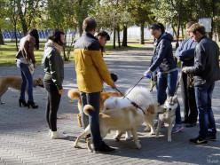 В Слуцком районе установлен налог за владение собаками и сбор с заготовителей диких растений