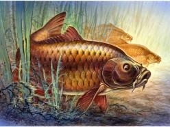 7 июня пройдут соревнования по рыбной ловле