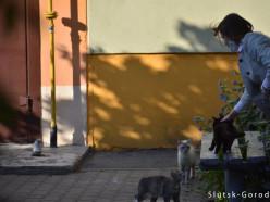 Котёнок оказался «замурованным» в стене «Виталюра». Как его спасали