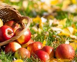 19 августа в Радичево отметят Яблочный спас