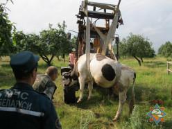 В Любанском районе работники МЧС оказали помощь в спасении коровы
