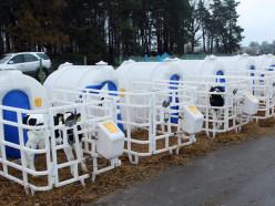 В Стародорожском районе телят поселили в пластиковые домики. Говорят, им нравится