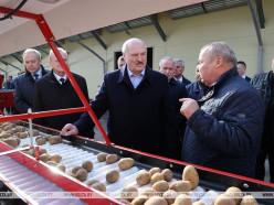 В Толочинском районе Лукашенко посетил картофельное производство и снова высказался о протестующих