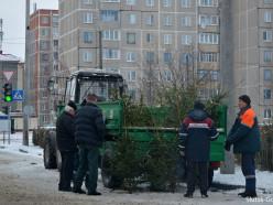 Стали известны цены на новогодние деревья в Слуцке (обновлено)