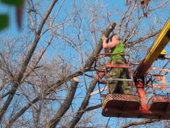 В марте ЖКХ удалит в Слуцке 66 деревьев