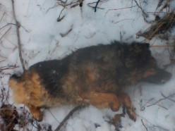 Случчанка: сосед 7 лет назад застрелил нашу собаку, а недавно задушил её щенка