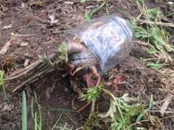 Смертельное отравление ядовитым растением: погиб мужчина и ребёнок