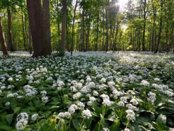 В Стародорожском районе введён запрет на посещение лесов