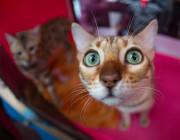 25 марта в Галерее искусств пройдёт выставка кошек