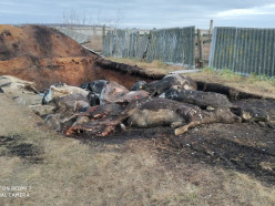 В Слуцком районе сфотографировали скотомогильник под открытым небом. Что на это ответили в хозяйстве