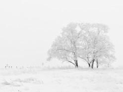 Температура выше нормы и снег - Белгидромет о погоде на неделю