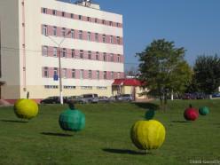 Фотофакт: декоративные яблоки на набережной