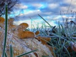 Слабый гололёд и заморозки ожидаются в ближайшие ночи